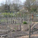 de zonnestralen tuin van Kirsten